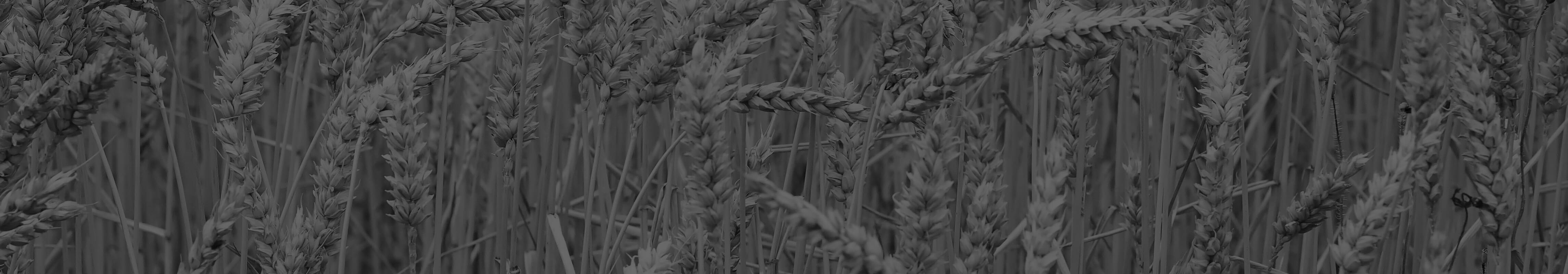 Produktvergleich, Getreidemühle, Getreidequetsche, Flockenquetsche